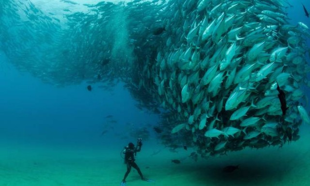 Fish Spawning and Illusions of Plenty