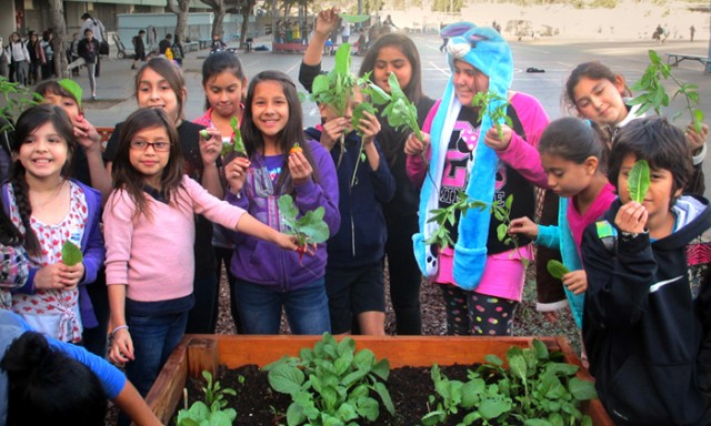Researchers to Bring Gardens, Cooking Classes to Austin-Area Schools