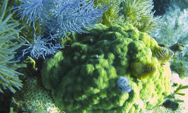 New Coral Research Exposes Genomic Underpinnings of Adaptation