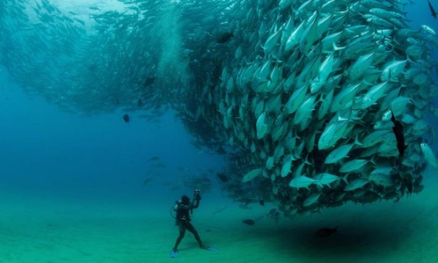 Spying on Fish Love Calls Could Help Protect Them from Overfishing