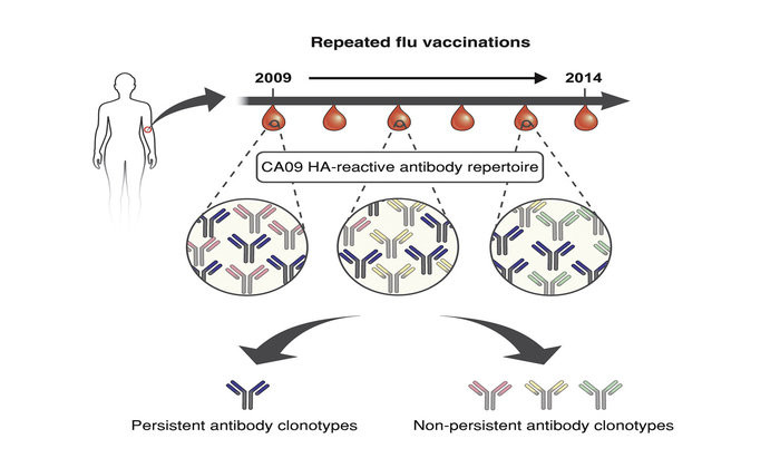 Antibodies From Earlier Exposures Affect Response To New Flu Strains