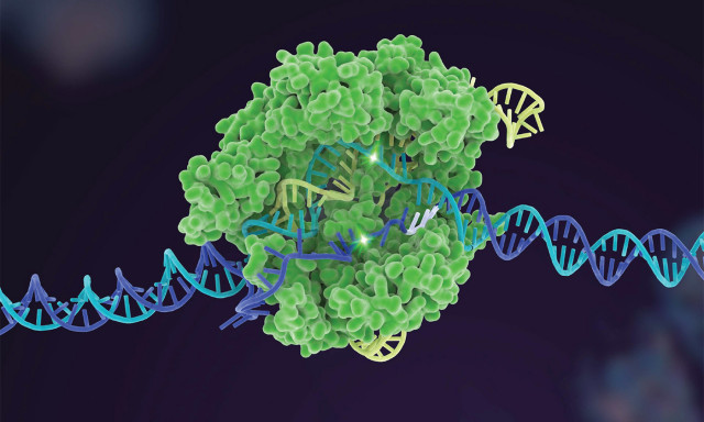 Matching CRISPR to the Job Improves the Safety, Efficiency of the Gene-Editing Tool