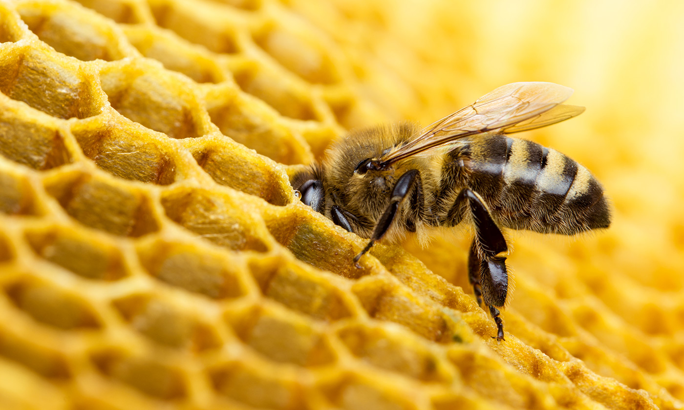 Two Pesticides Approved for Use in U.S. Harmful to Bees