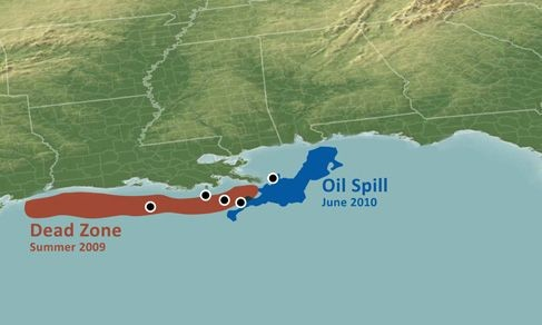 Texas Marine Scientist Studies Oil Spill Effects on Oxygen Levels in the Gulf of Mexico 'Dead Zone'
