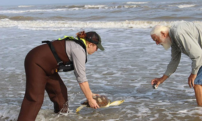 Rescuing Sea Turtles From the Cold