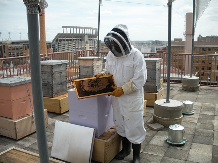 How do you move 100,000 bees from Connecticut to Texas in August?