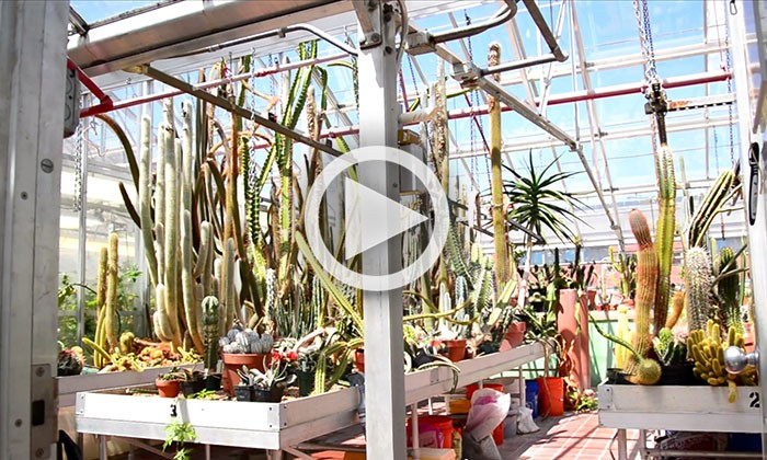 Head Room: The UT Austin Greenhouses