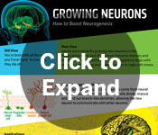 Growing Neurons poster