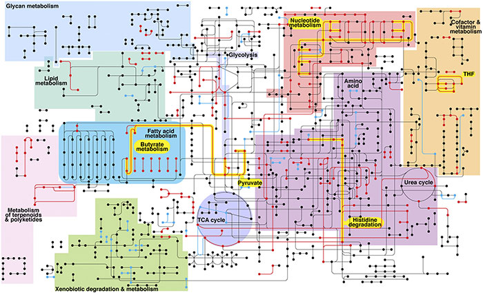 metabolic network of the diseased periodontal microbiome