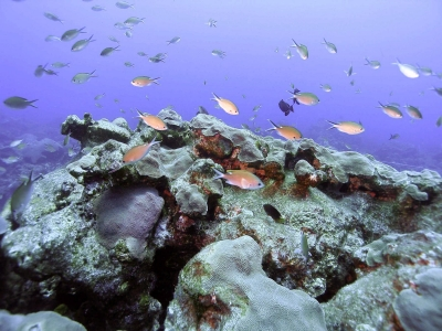Gulf Of Mexico Ecosystems Intimately Tied To Climate