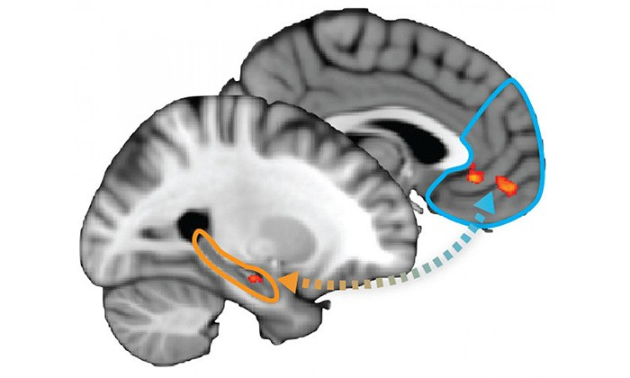 UT Austin Researchers Map Neurological Process of Learning, Deciding