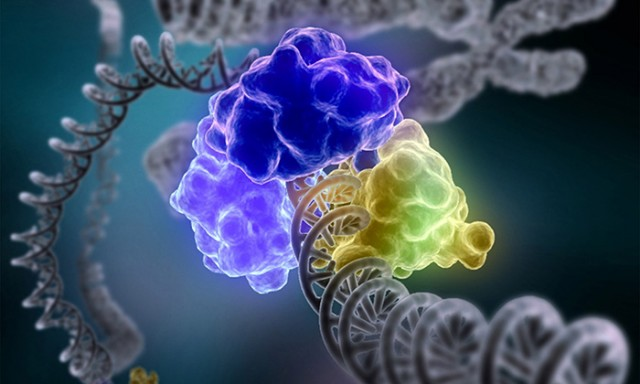 DNA Repair Findings Shed Light on Pathways Affecting Cancer Progression