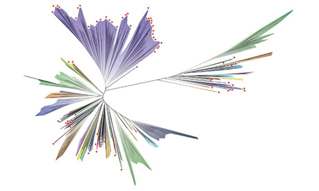 Scientists Unveil the Most Comprehensive Genomic Tree of Life