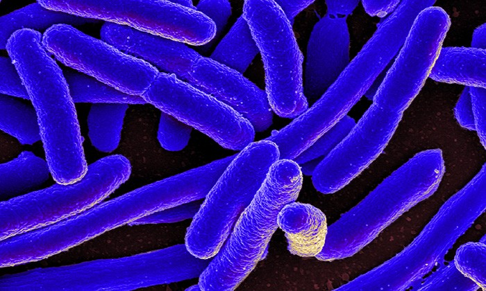 Genetic Signatures Reveal Environment Where Bacteria Evolved