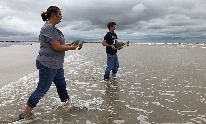 UT Marine Scientists to Relocate Temporarily to Texas A&M's Corpus Christi Campus