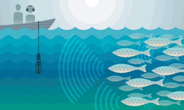 Can Sound Save a Fish? (Audio)