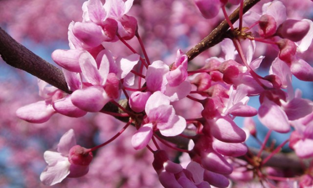 5 Things Scientists Say to Try in Your Yard This Spring