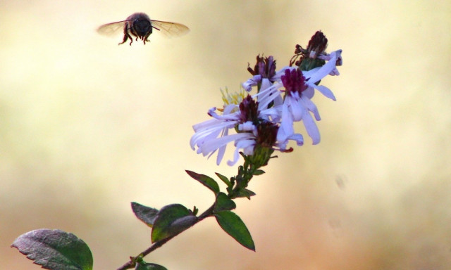 UT Austin Abuzz about Bee Campus USA Certification
