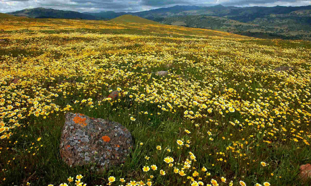 Study on Climate Change Impacts on Plants Could Lead to Better Conservation Strategies