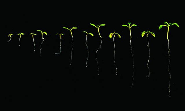 New Insights Could Lead to Crops Adapted to a Warming World