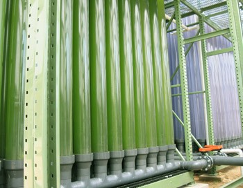 Large Facility For Growing Algae for Biofuels Opens