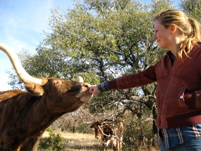 Tracing Bevo: Graduate Student Studies Ancestry of Texas Longhorns