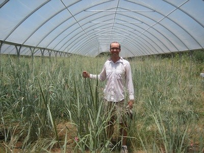 Biologist Receives $1.5 Million to Study Potential Biofuel Crops